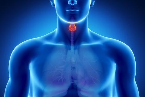 Tiroid Bezi Hastalıkları Nelerdir